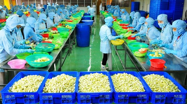 Factory processing fruit for export launched in Ben Tre hinh anh 1