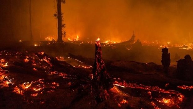 Indonesia declares emergency due to forest fires hinh anh 1