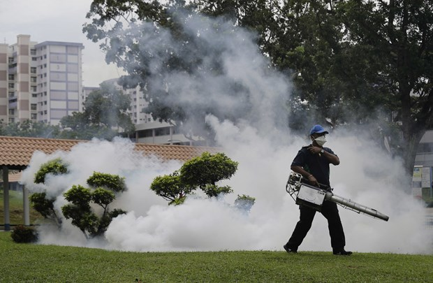 Singapore reports drop in new Zika infections hinh anh 1