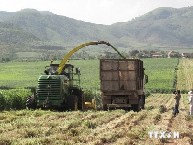 IFAD continues to back Vietnam in agricultural development hinh anh 1