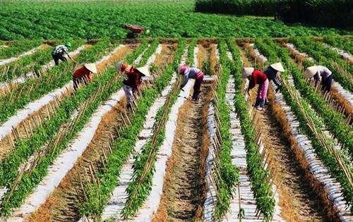 Tay Ninh aims to be agri-tech hub hinh anh 1