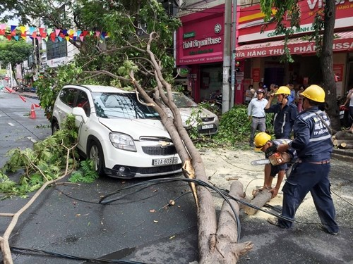 HCM City urged to inspect thousands of trees hinh anh 1