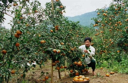 Integrated farming a hit with room to grow hinh anh 1