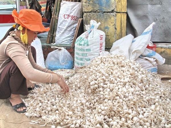 White sand overexploitation challenges garlic farming hinh anh 1
