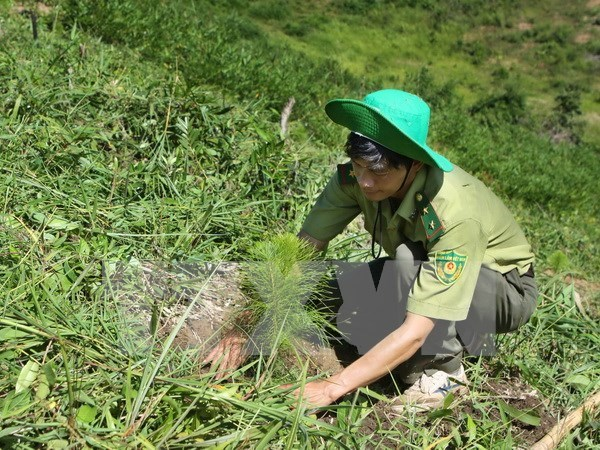 Ca Mau embarks on sustainable forestry development hinh anh 1