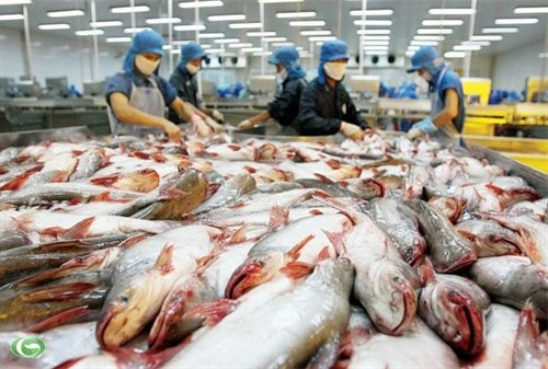 US approves two more Vietnamese catfish firms hinh anh 1