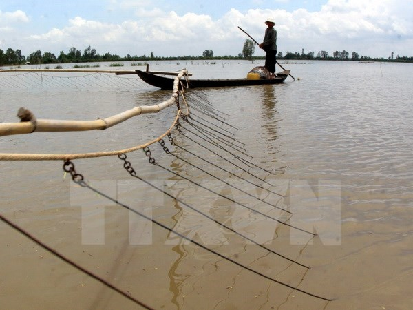 Fishermen switch jobs as Mekong Delta dries up hinh anh 1