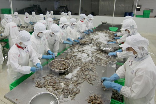 US keeps duties on Vietnamese frozen shrimp hinh anh 1