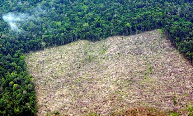 World Bank, Denmark support Indonesia's forest management hinh anh 1