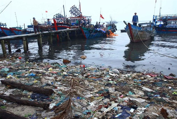 Marine ecosystems at risk of further damage hinh anh 1