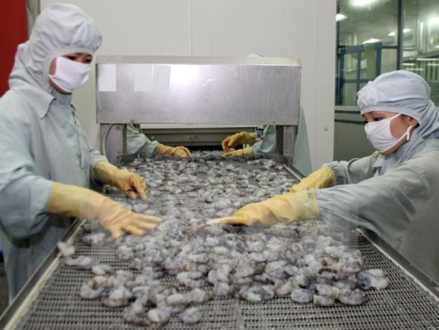 Safe shrimp production chain for export to be supervised hinh anh 1