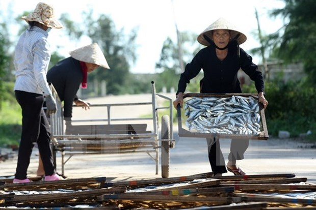 Central localities work on Formosa's fish death compensation hinh anh 1