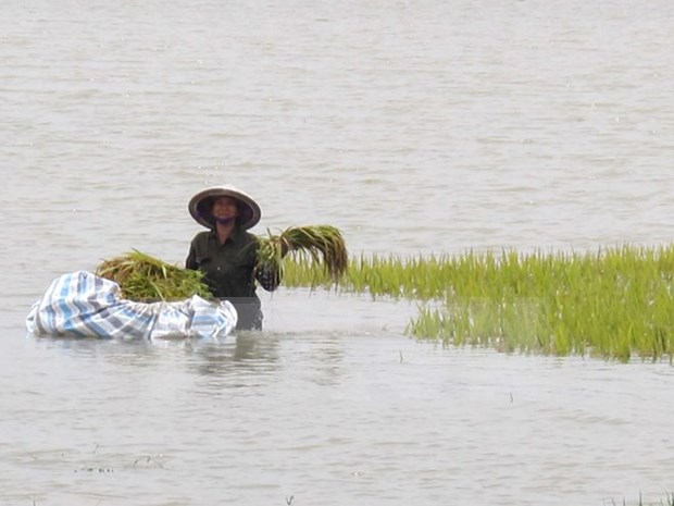PM approves financial assistance to storm-hit northern provinces hinh anh 1