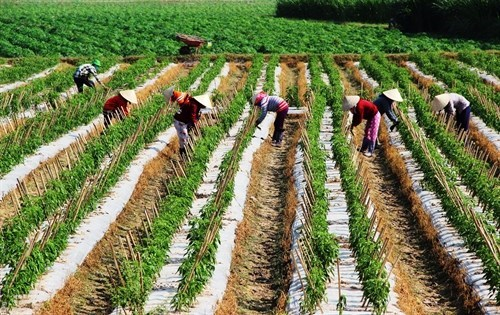 EU promotes trade on farm products, food with Vietnam hinh anh 1