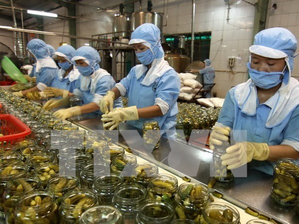 EU pledges to cooperate in food safety with HCM City hinh anh 1