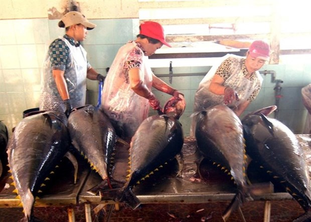 Tuna export shows sign of recovery hinh anh 1