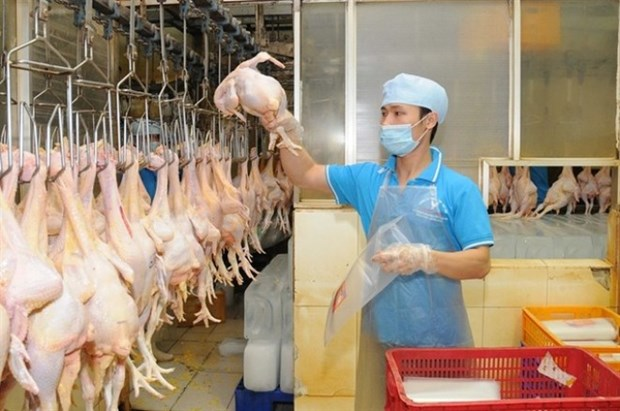 Vietnam to boost chicken exports hinh anh 1