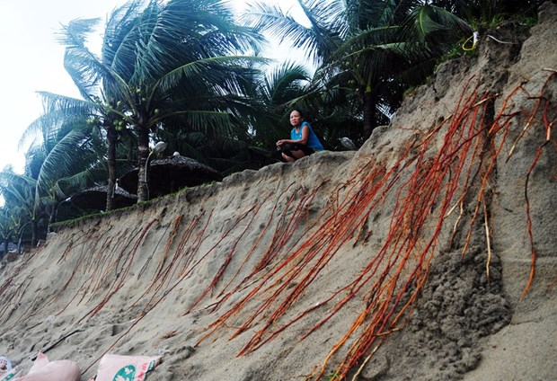 Erosion threatens beach in Lang Co Bay hinh anh 1