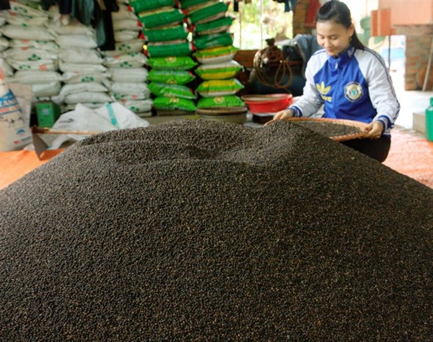 Prices of Vietnam's black pepper drop hinh anh 1