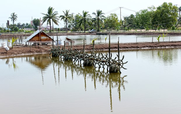 Ca Mau looks at ways to support local fishery hinh anh 1