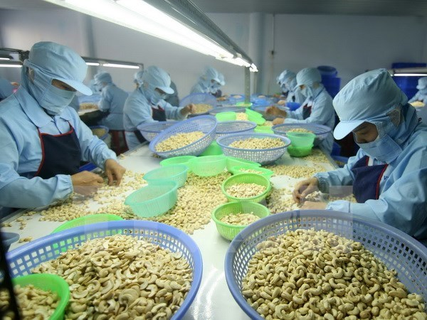Ten-month cashew export enjoys robust growth hinh anh 1