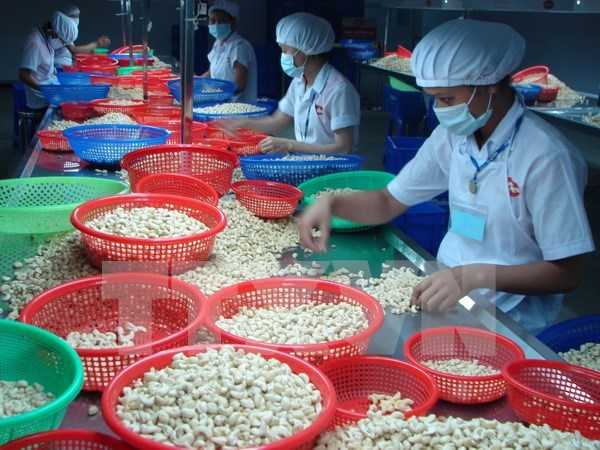 Conference seeks to improve quality of Vietnamese cashew hinh anh 1