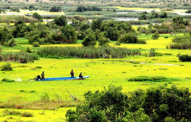 U Minh Thuong National Park preserves biodiversity hinh anh 1
