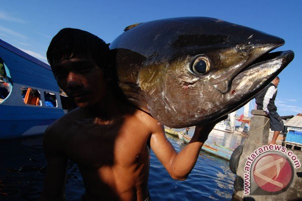 Indonesia to increase fish consumption hinh anh 1