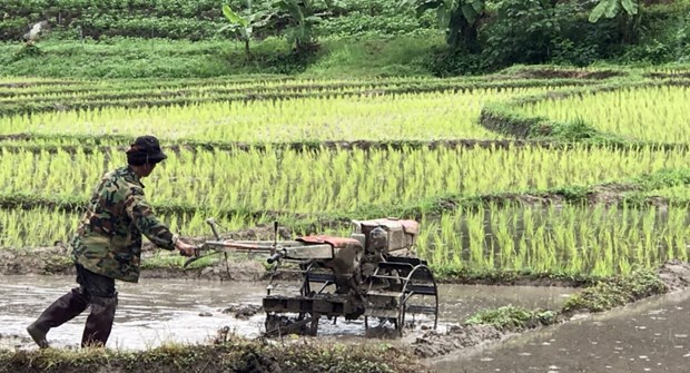 Thai farmers seek government's aid hinh anh 1