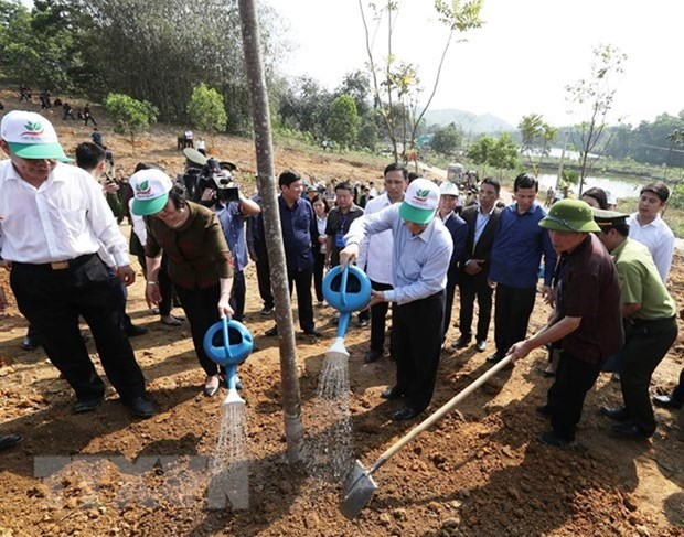 Tree planting - a traditional custom in Lunar New Year festival hinh anh 1