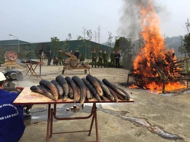 Elephant tusk destruction should become a practice: ENV hinh anh 1