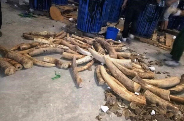 Elephant tusk destruction should become a practice: ENV hinh anh 3