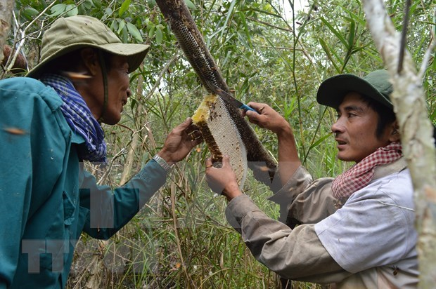 Ca Mau's special apiculture recognised as intangible cultural heritage hinh anh 1