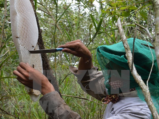 Ca Mau's special apiculture recognised as intangible cultural heritage hinh anh 2