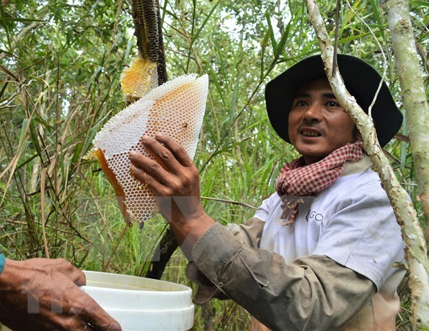 Ca Mau's special apiculture recognised as intangible cultural heritage hinh anh 3