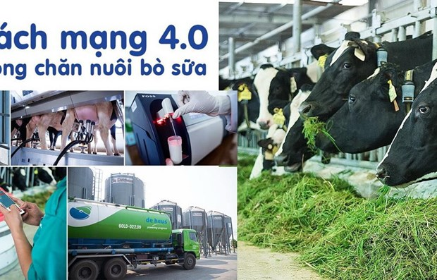 Vinamilk to expand milch cow farms hinh anh 1