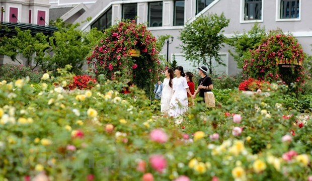 Second phase of domestic tourism stimulus prevents economic disruption hinh anh 2