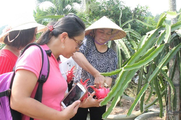 Binh Thuan developing tourism products in association with sustainable agriculture hinh anh 2