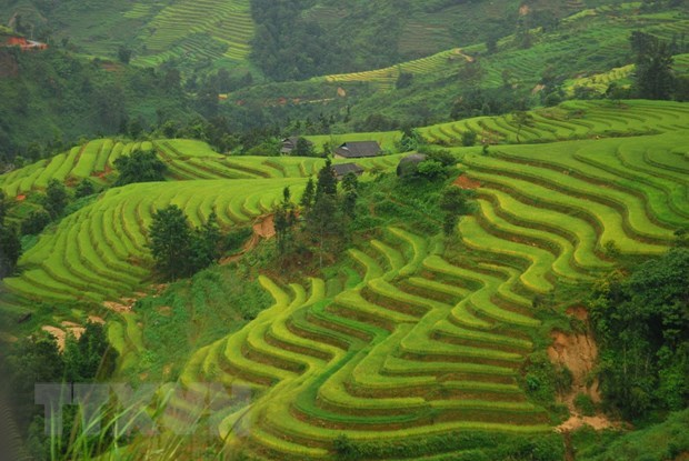 Majestic, poetic Ha Giang attractive to visitors hinh anh 2