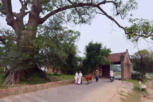 Duong Lam first Vietnamese ancient village to become national relic hinh anh 1