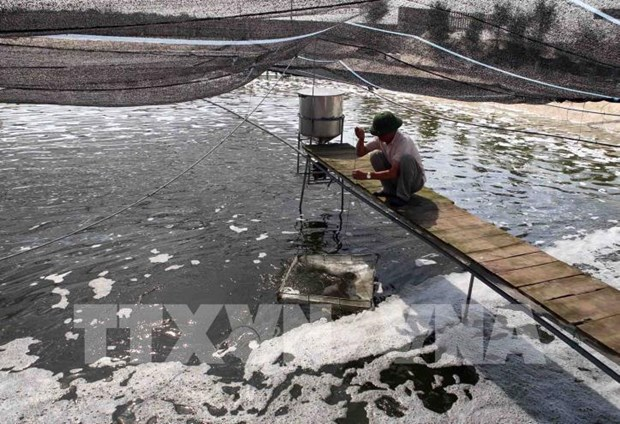 Bac Giang looks to build 130 high-tech intensive aquaculture models hinh anh 1