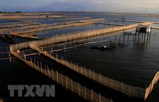 Bac Giang looks to build 130 high-tech intensive aquaculture models hinh anh 2