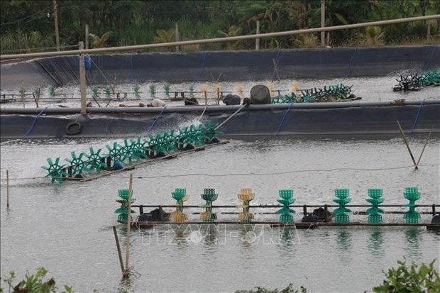 Tien Giang to expand aquatic farming area to over 10,500 ha hinh anh 1