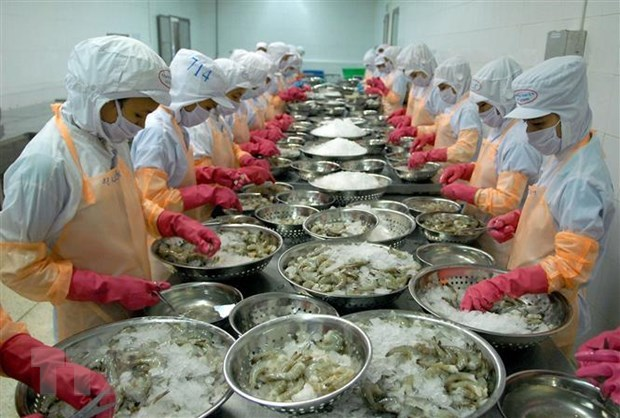 Shrimp businesses invest in long-term development hinh anh 1