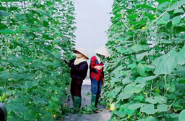 Application of scientific, technological advances boosts development in rural, mountainous regions hinh anh 1