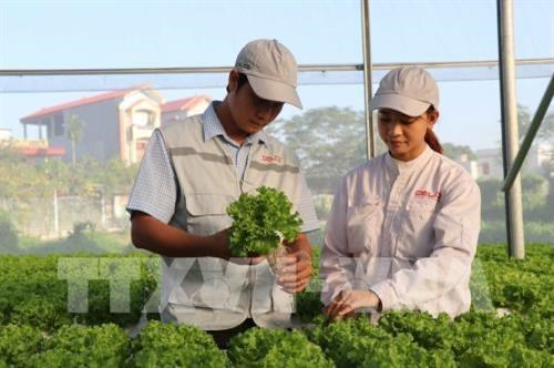 Application of scientific, technological advances boosts development in rural, mountainous regions hinh anh 2