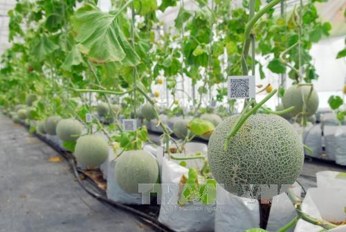 Project approved to boost growth of agricultural biotech industry hinh anh 1