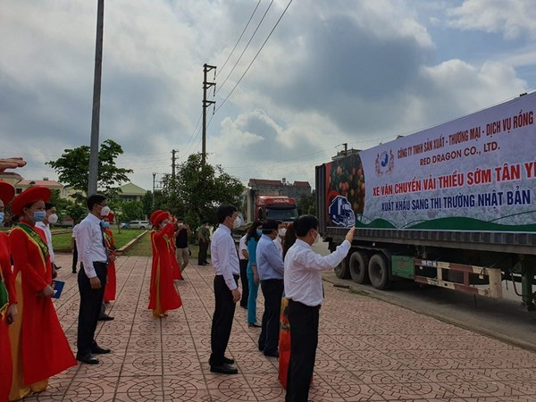 Businesses team up with Bac Giang farmers in selling lychee hinh anh 1