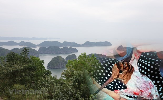Vietnam acts to stamp out poaching of migratory wild birds hinh anh 1