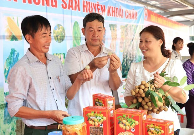 E-commerce expected to help Hung Yen longan reach out to foreign markets hinh anh 2